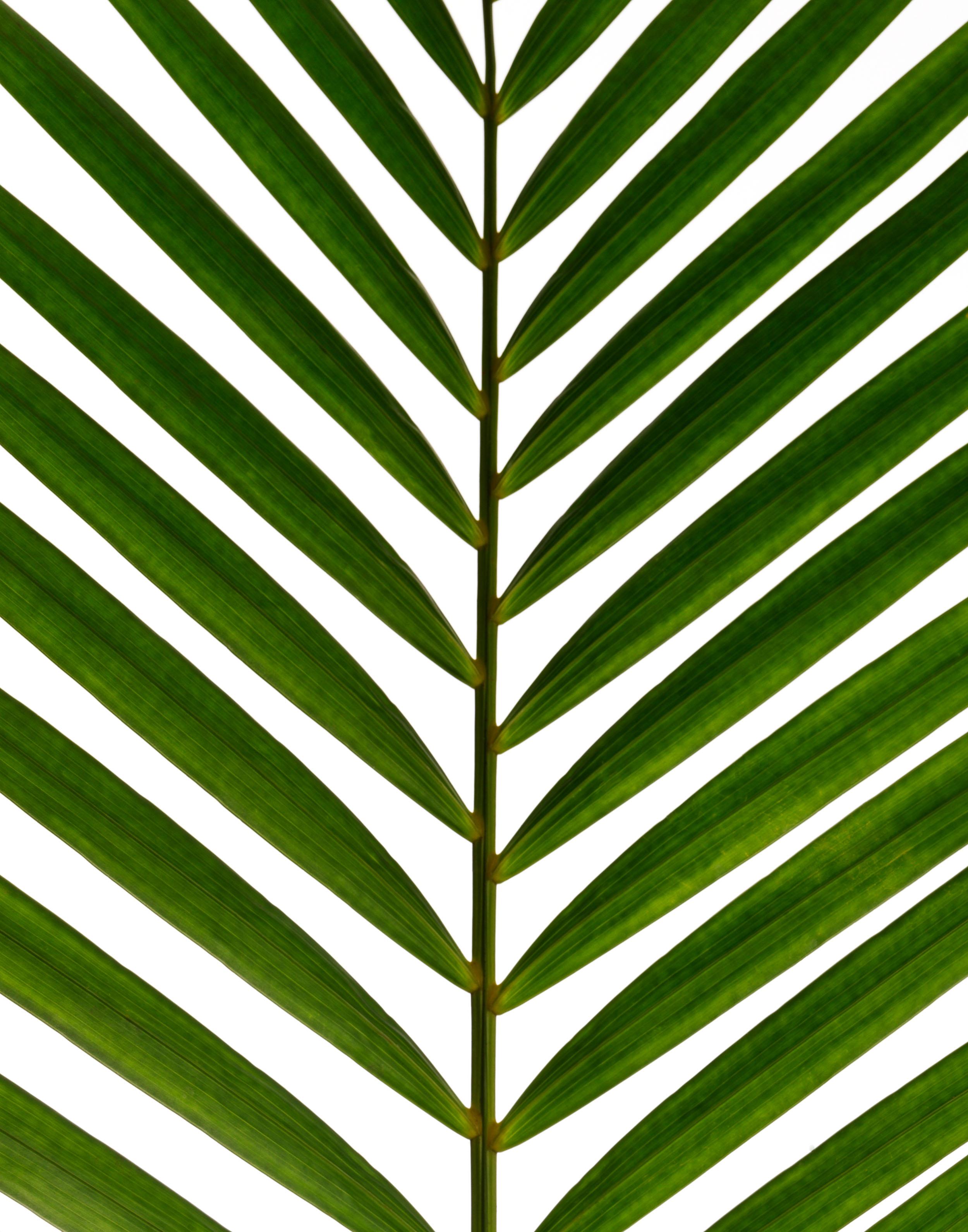 tropical_palm_010_R.jpg