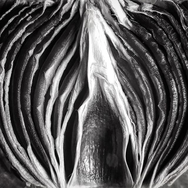 #onion #redonion #macro #closeup #graphic #dried #driedonion #layers