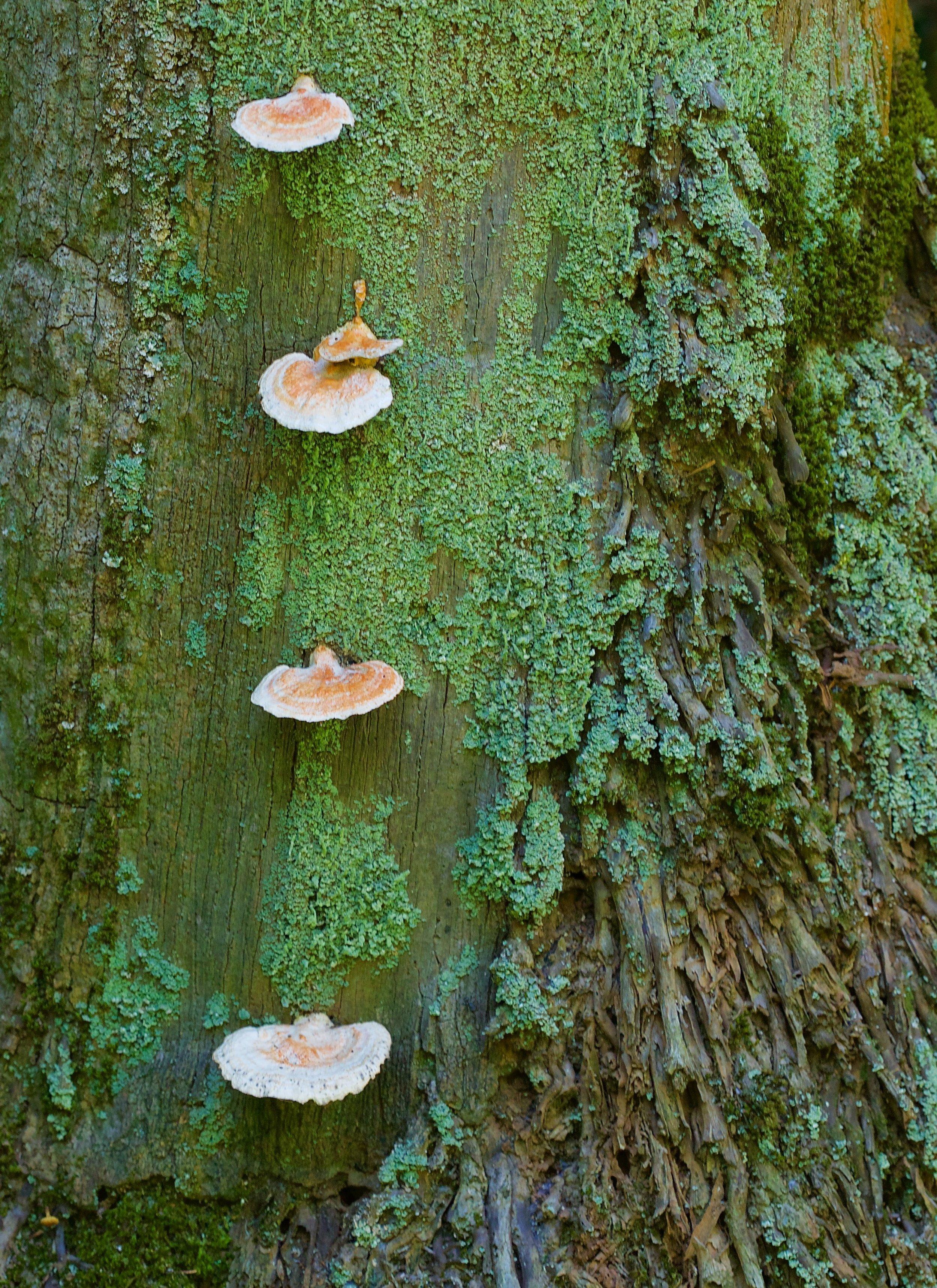 fungi - 1.jpg