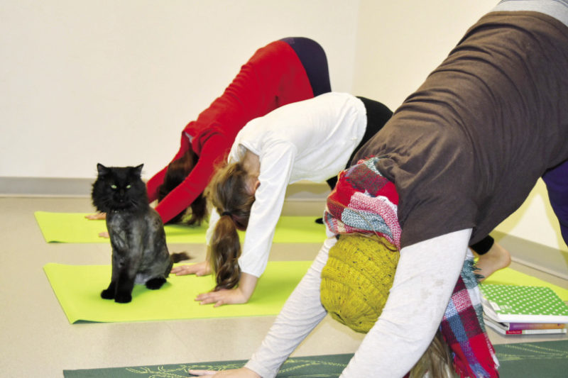 Cat Yoga at the Douglas County Humane Society - Northern Wilds MagazineBy Ali JutenPublished February 26, 2018