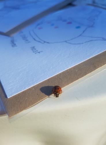 ladybird 2.jpg