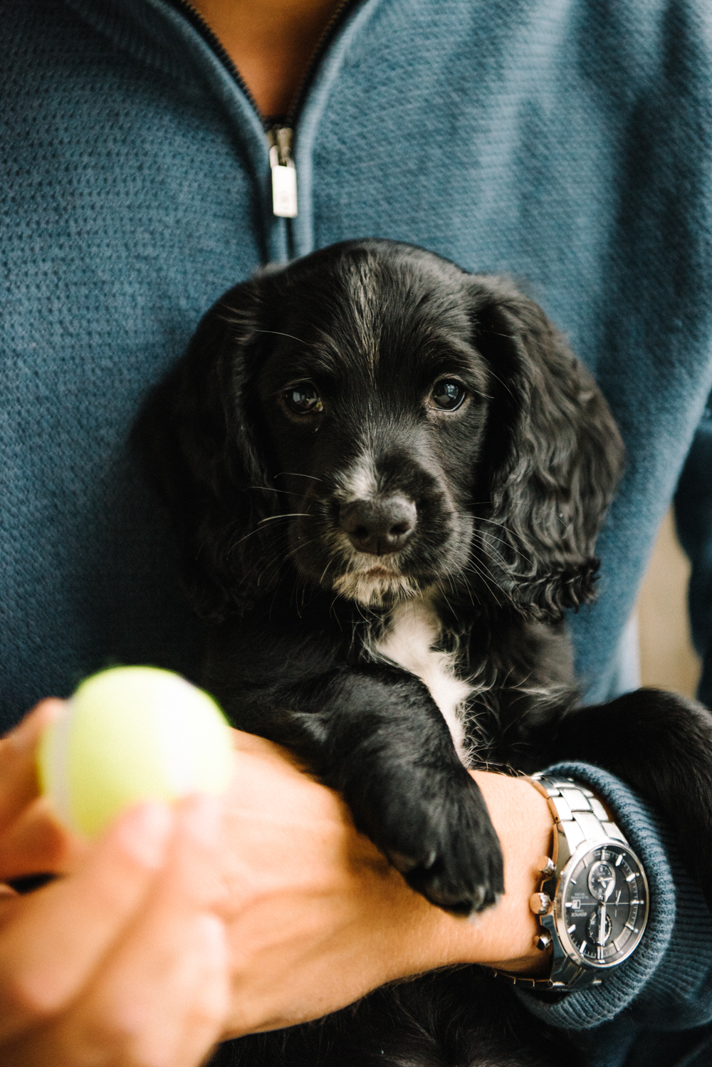 Milo // www.oliviabossert.com // puppy, dog, working cocker spaniel, country dog, 8 weeks