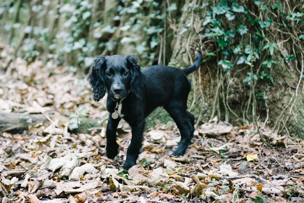 A Walk In Godolphin Woods With Milo For Joules