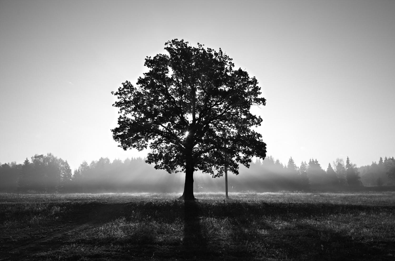 centered-tree.jpg