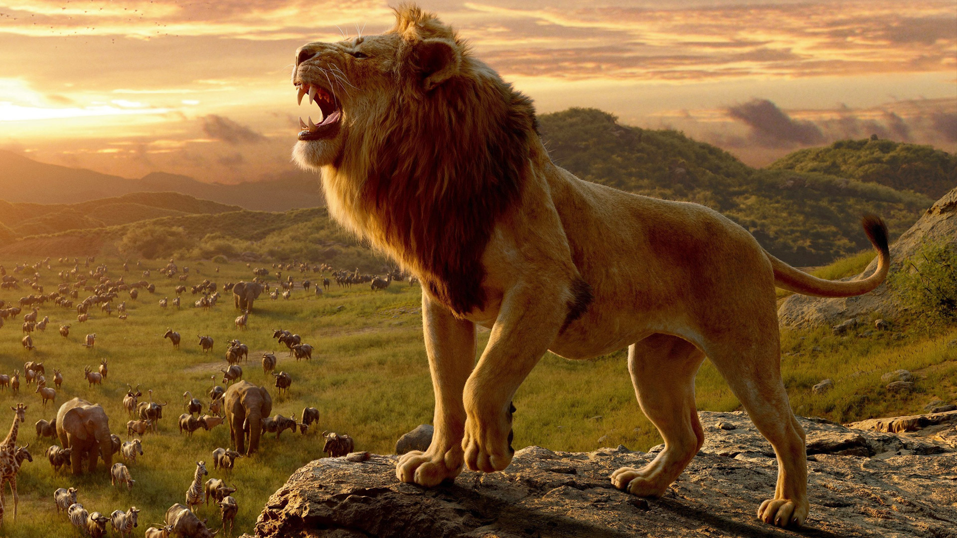 lionking2019_feature.jpg