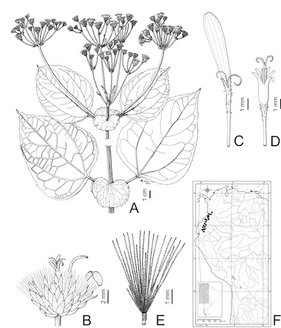 Monographs — American Society of Plant Taxonomists