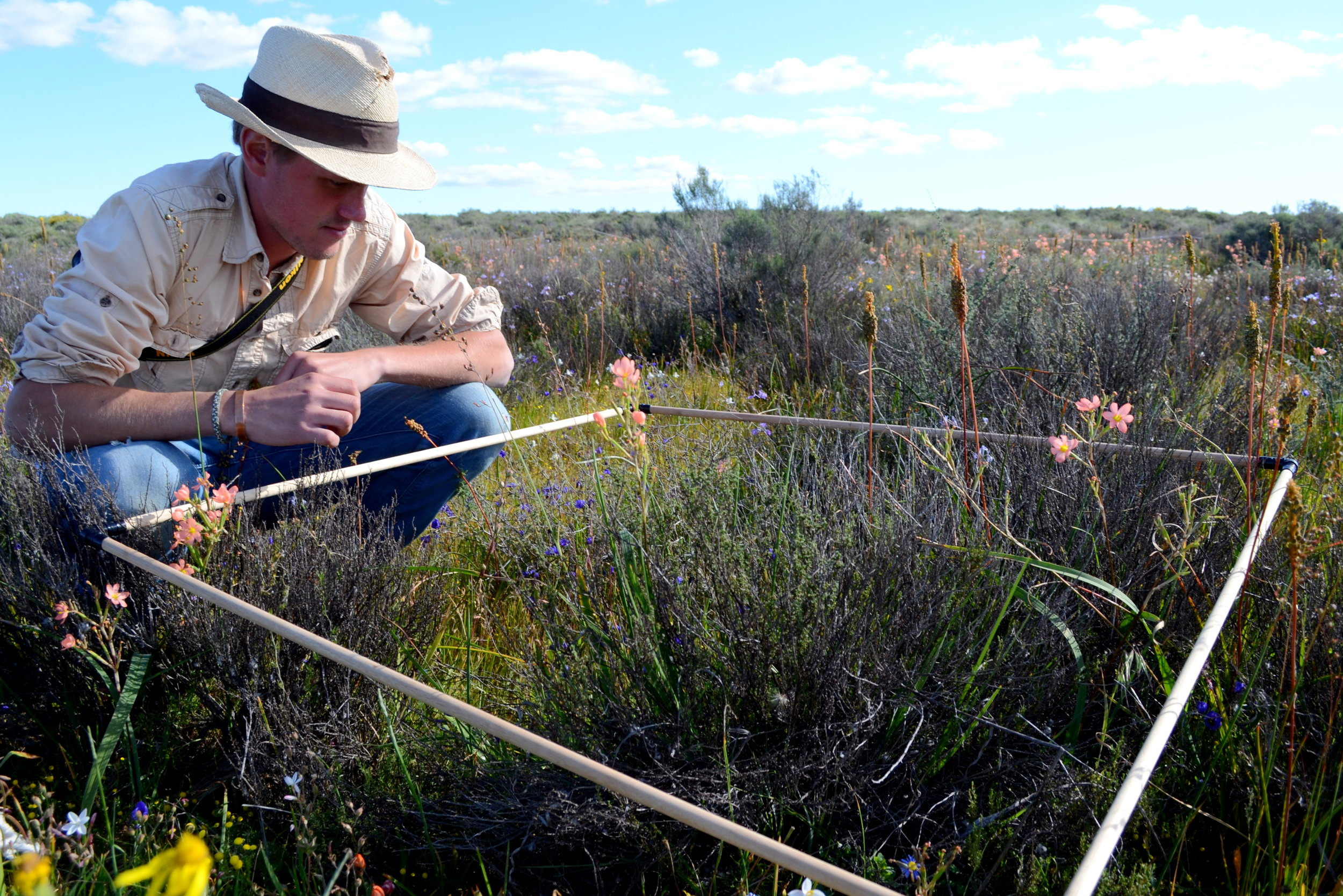 Evan Eifler   Spatial and temporal patterns of diversification in  Geissorhiza  (Iridaceae): Phylogeny, biogeography, and vulnerability in the Cape Floristic Province
