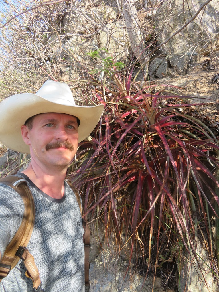 Andy Siekkinen   Systematics of the genus  Hechtia  (Bromeliaceae) in Northwest Mexico