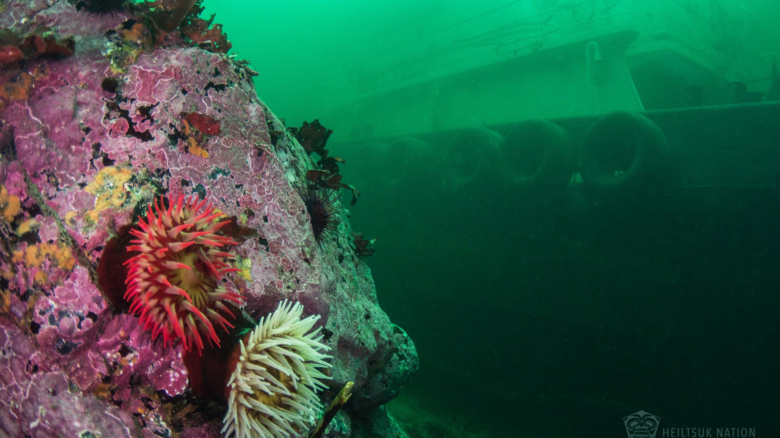 Oct24.NathanEStewart.Underwater.HeiltsukNation.02.jpg