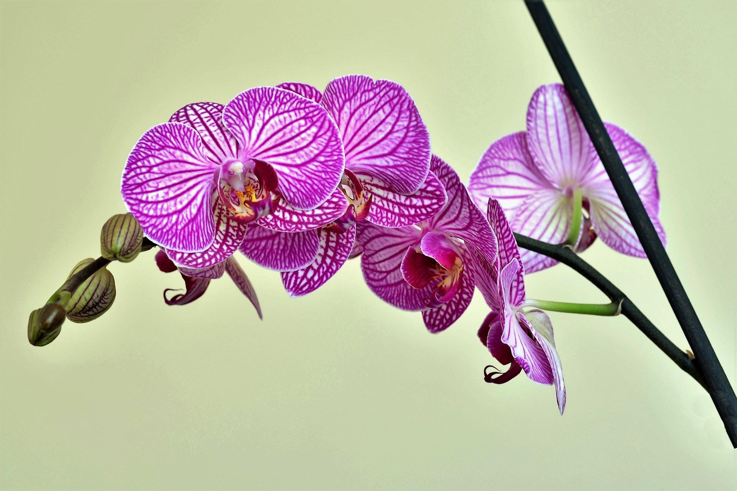 beautiful-bloom-blooming-459150.jpg