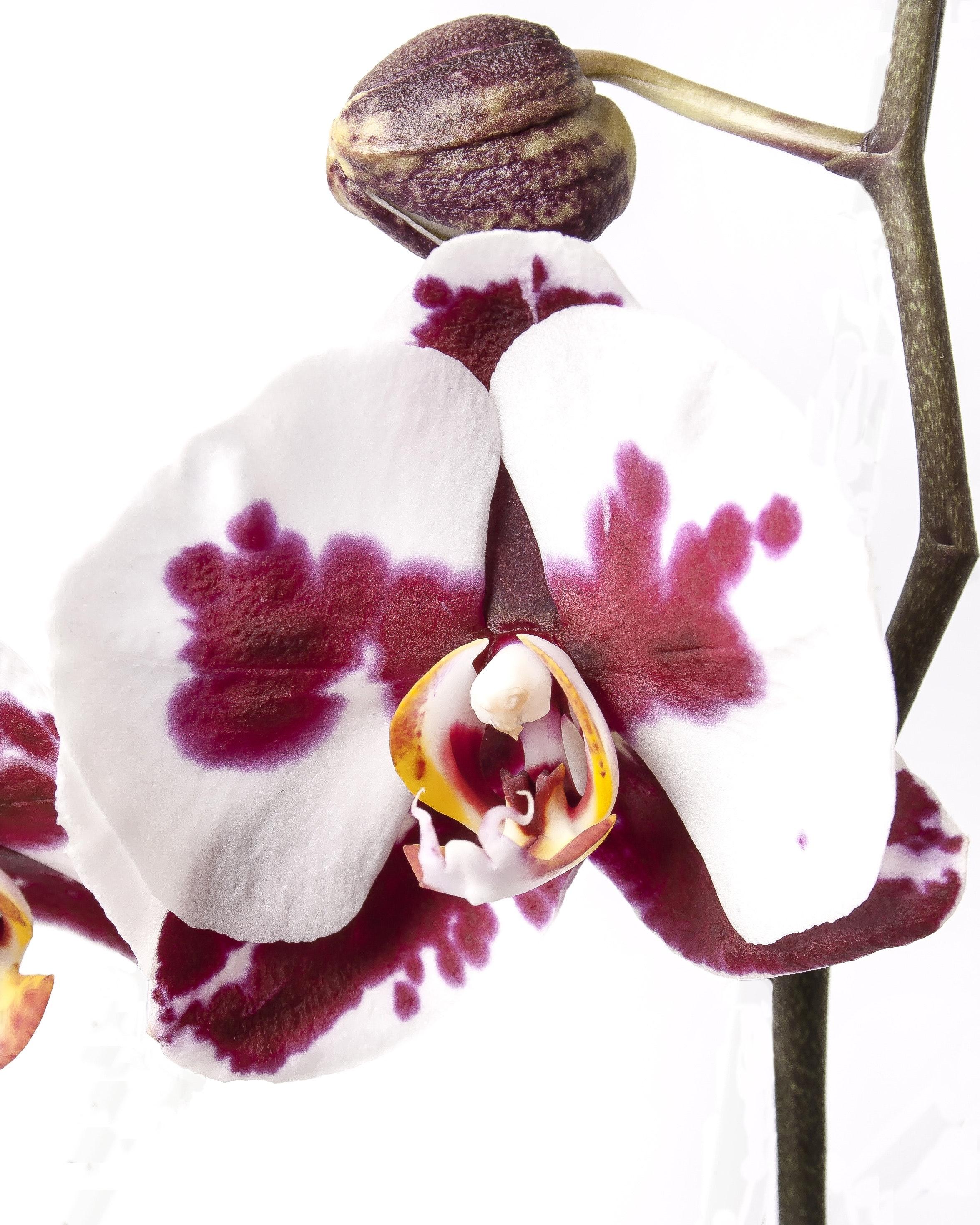 beautiful-bloom-blooming-248005.jpg