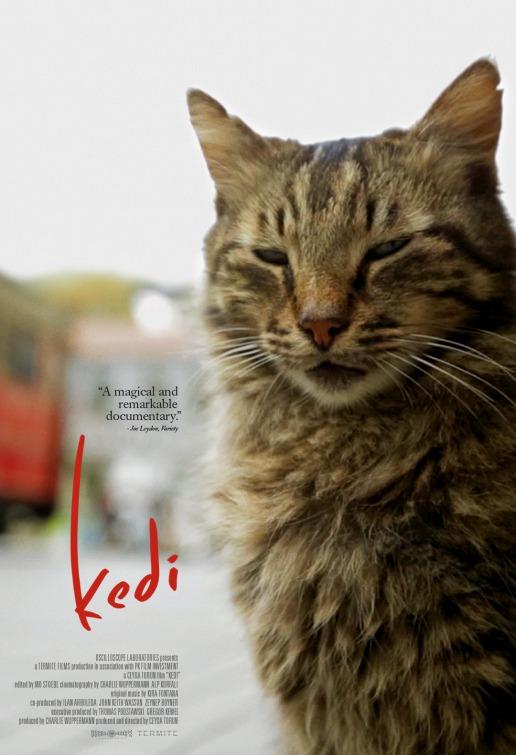kedi-film-poser 2.jpg