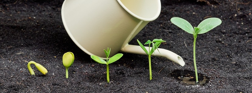 watering-plants-75957932-900x600.jpg
