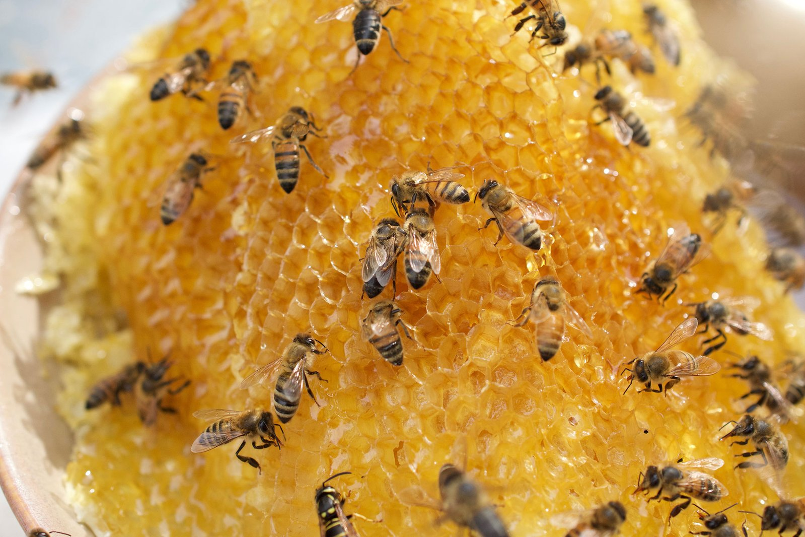 bee-products-for-autoimmunity.jpg