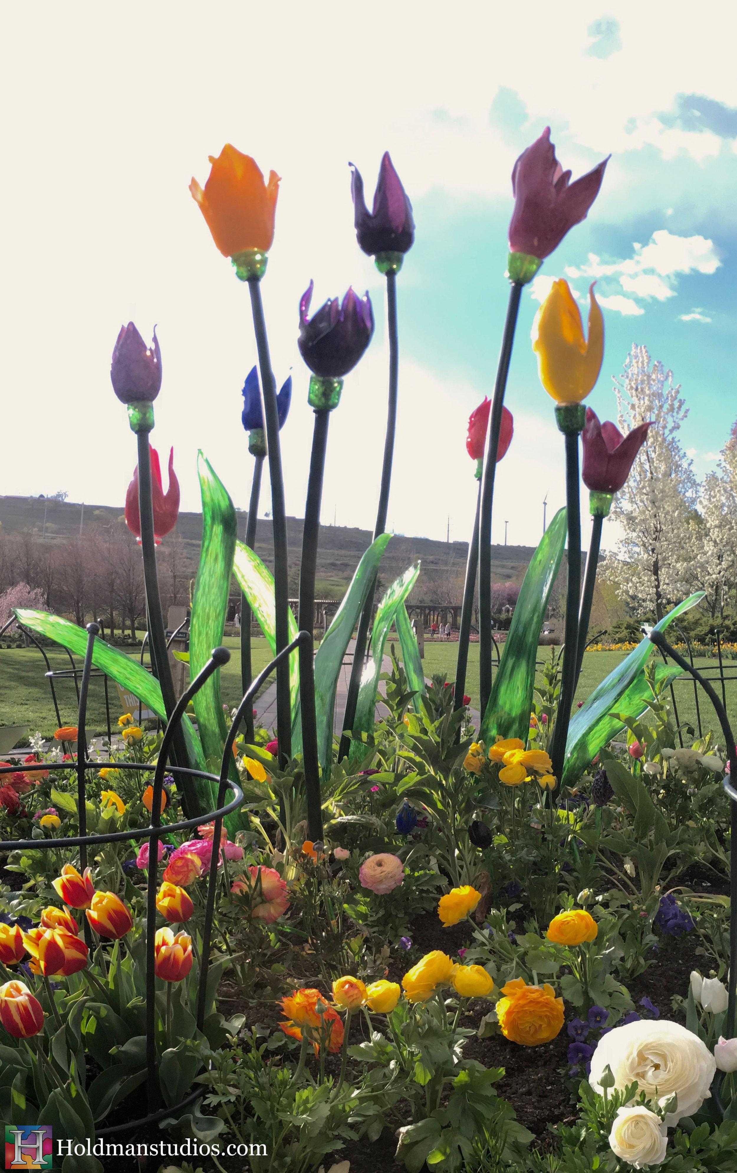 Blown Glass_Ashton Garden Tulips 3.jpg