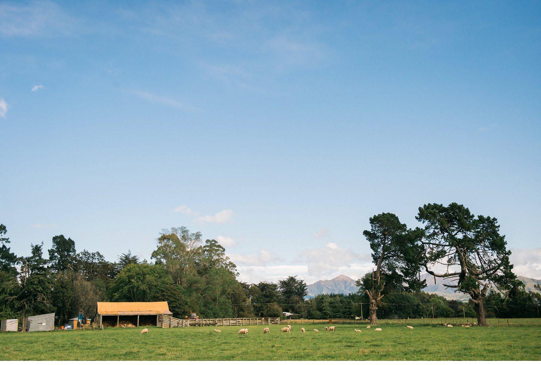 001 - Peel Forest Lodge Wedding Photographer.jpg
