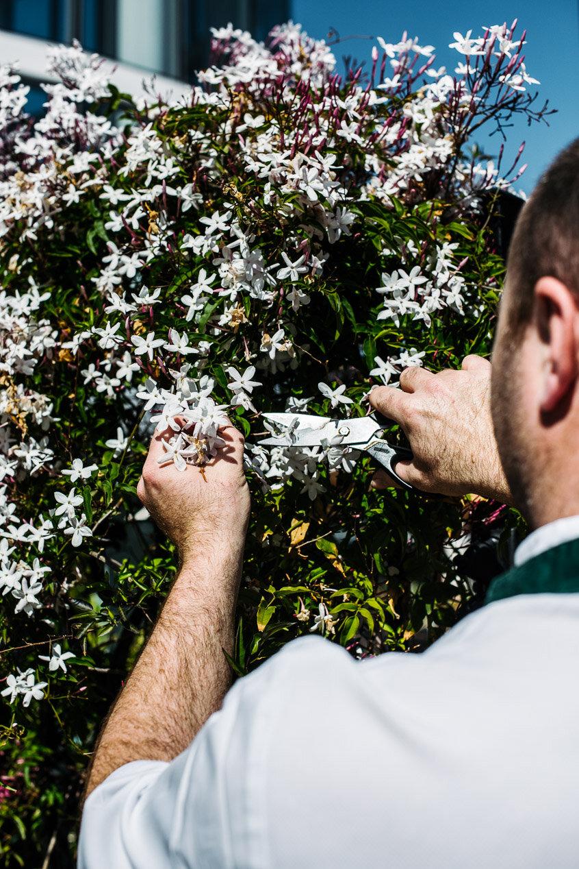 alanadimou-botanicvaucluse-spring-07.jpg