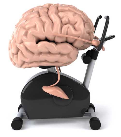 Brain on Exercise Bike.jpg