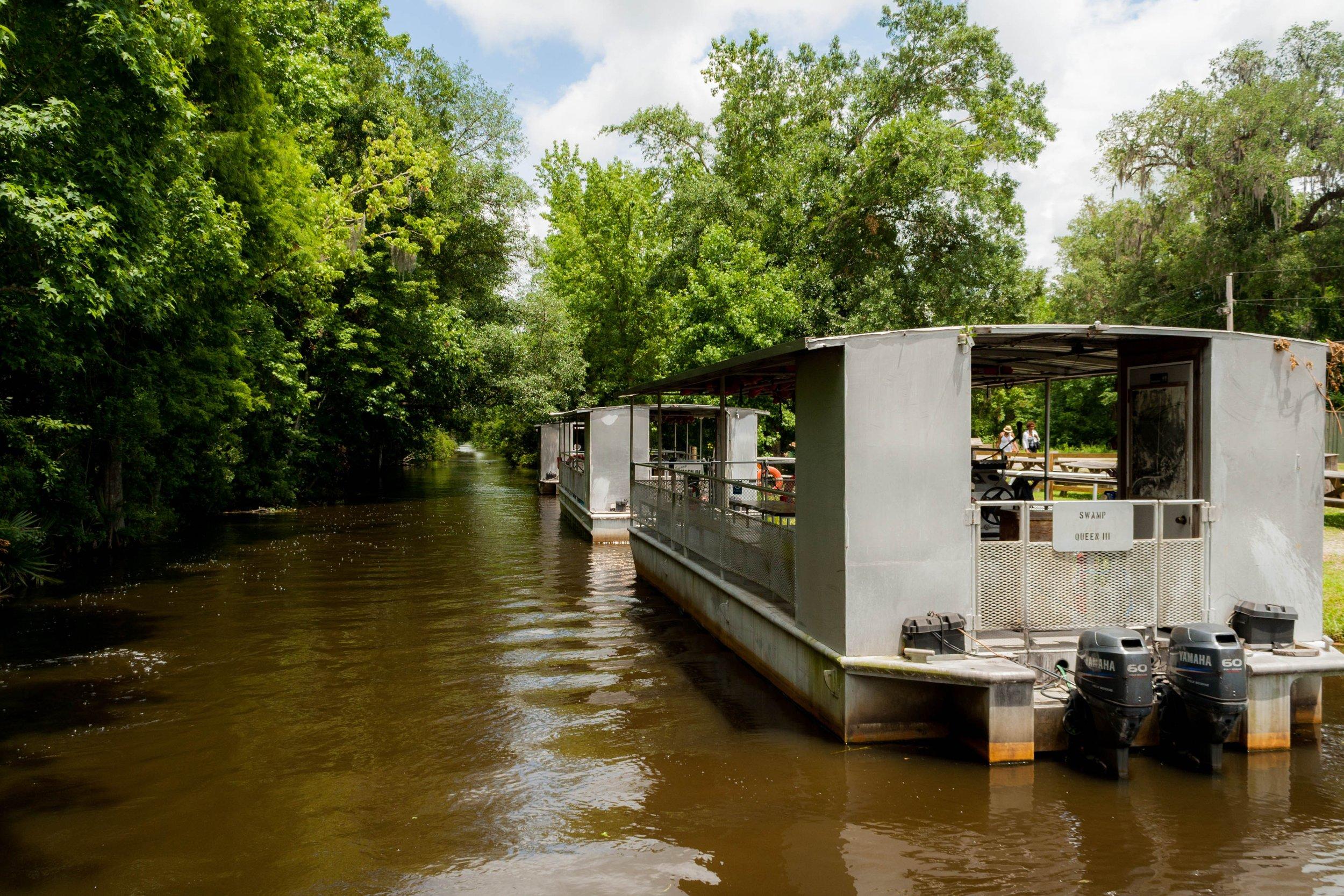 IMG_1768-Swamp-Queen-3.jpg