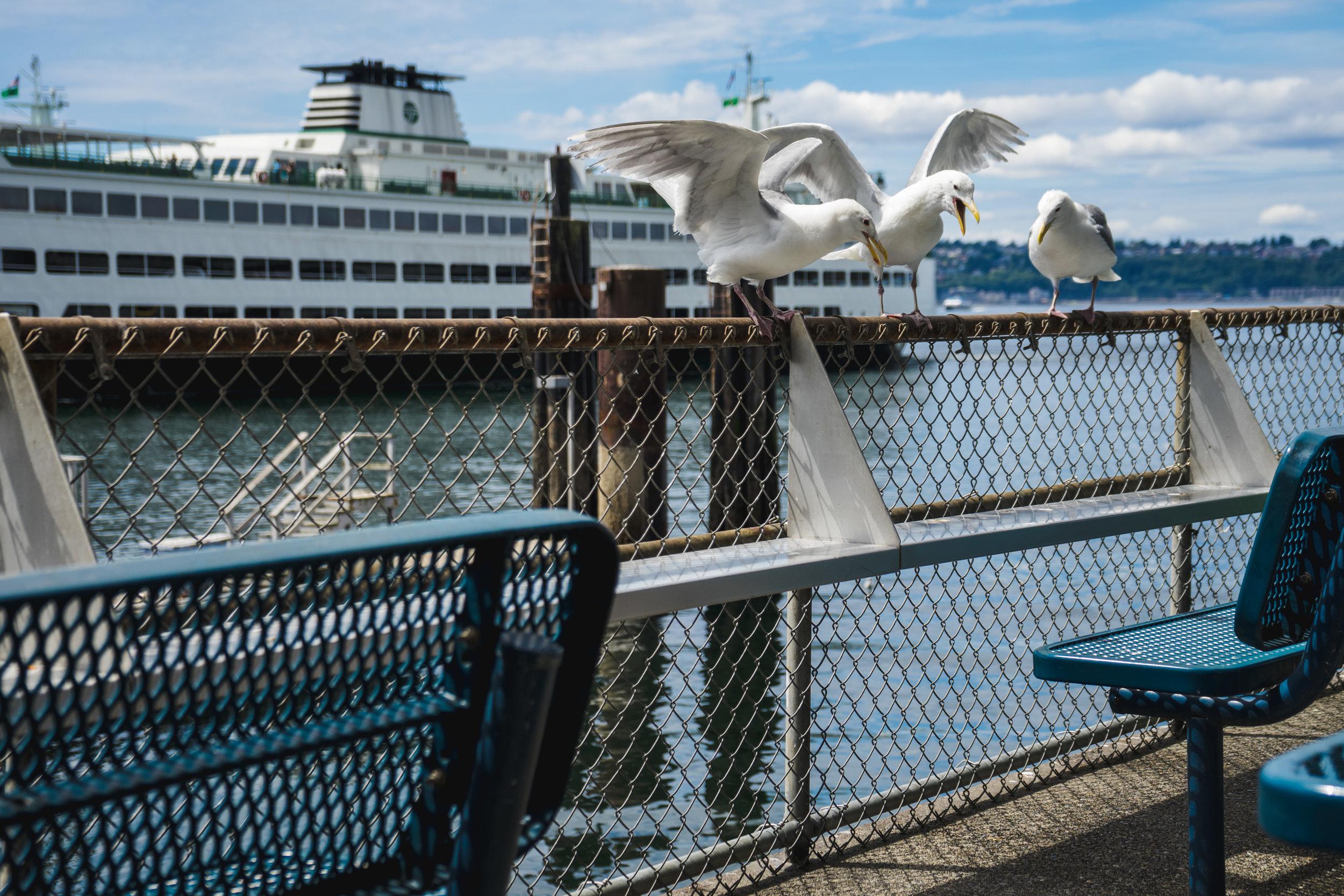 Ivar's Seagulls.jpg