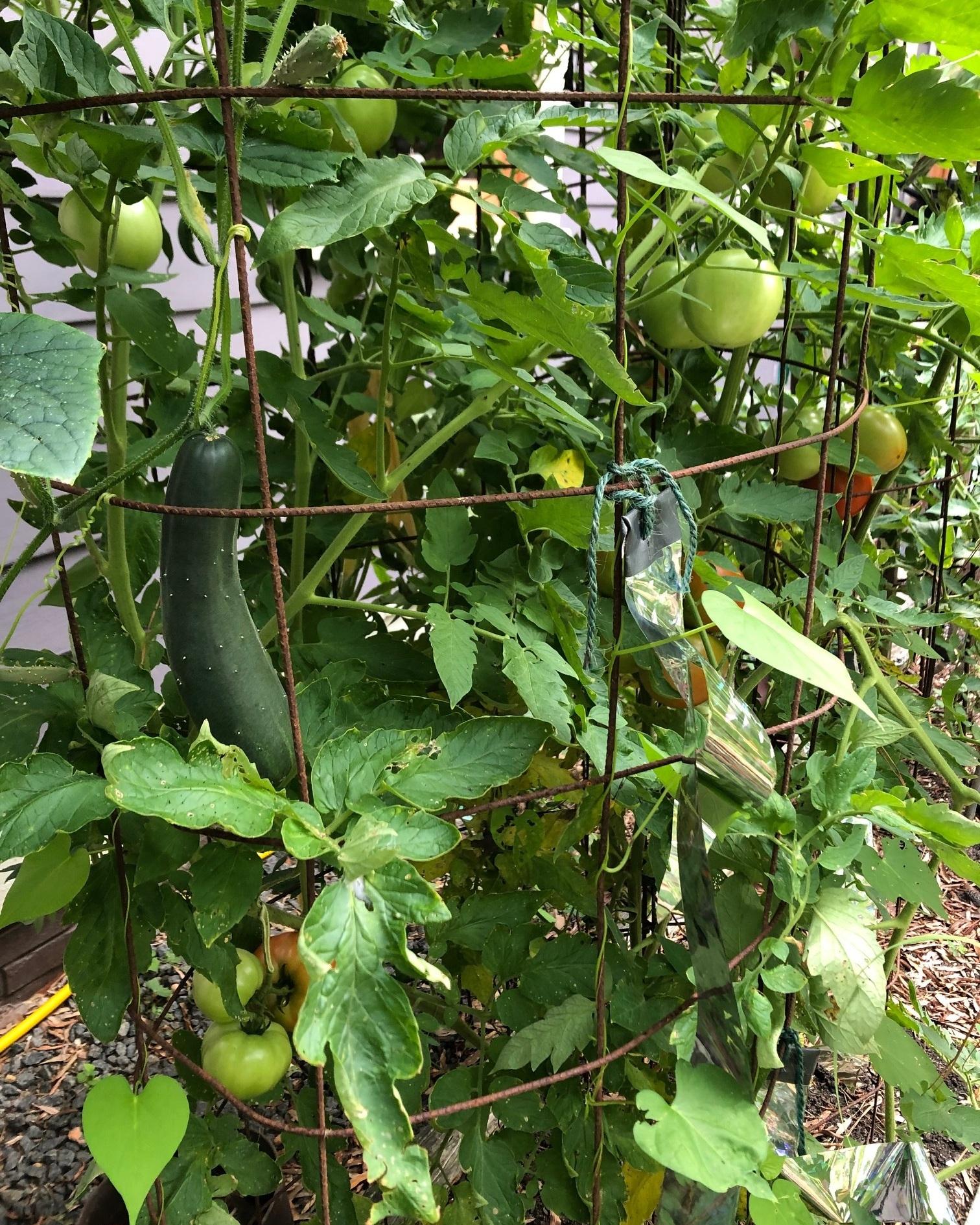 garden+1.jpg