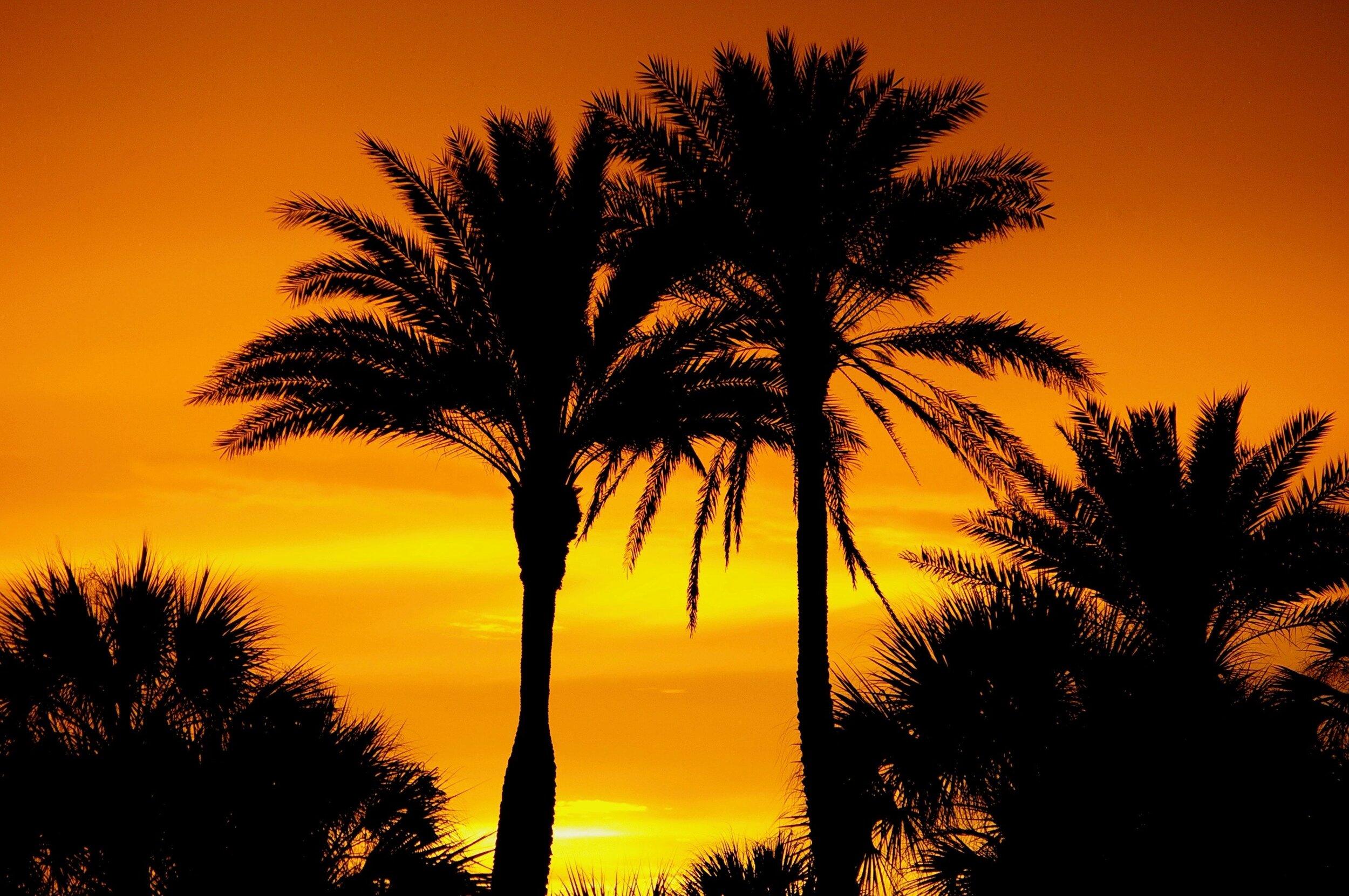 afterglow-coconut-trees-dawn-2594992.jpg