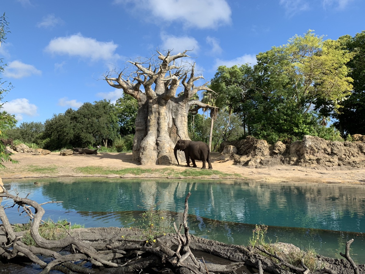 animal kingdom one day itinerary safari elephant.jpg