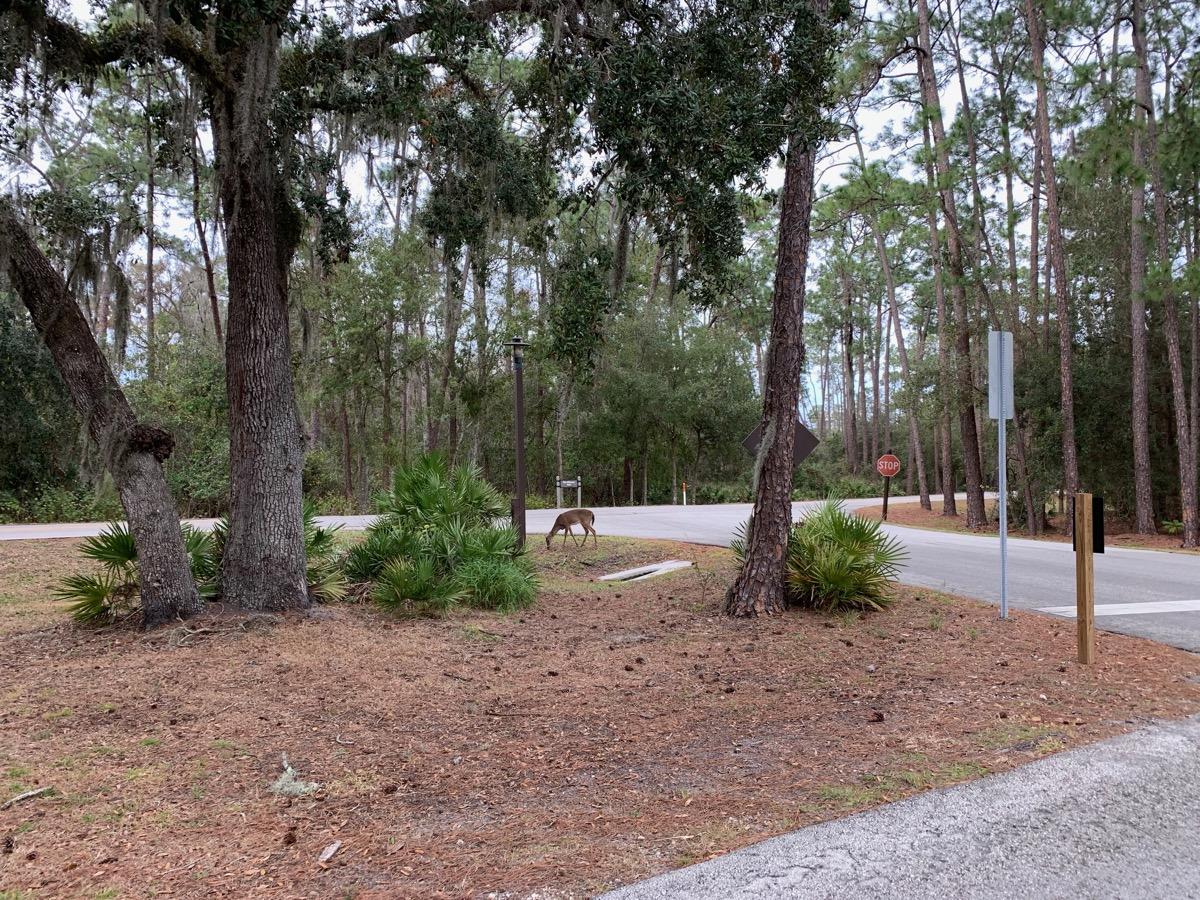 disneys wilderness lodge review deer path.jpg