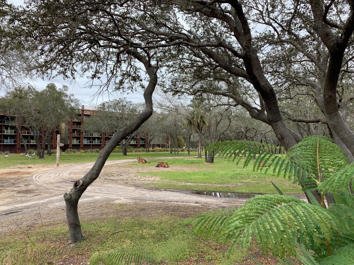 disney animal kingdom lodge review overlook 2.jpeg