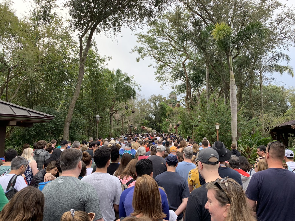 disney animal kingdom rope drop corralling 3.jpeg