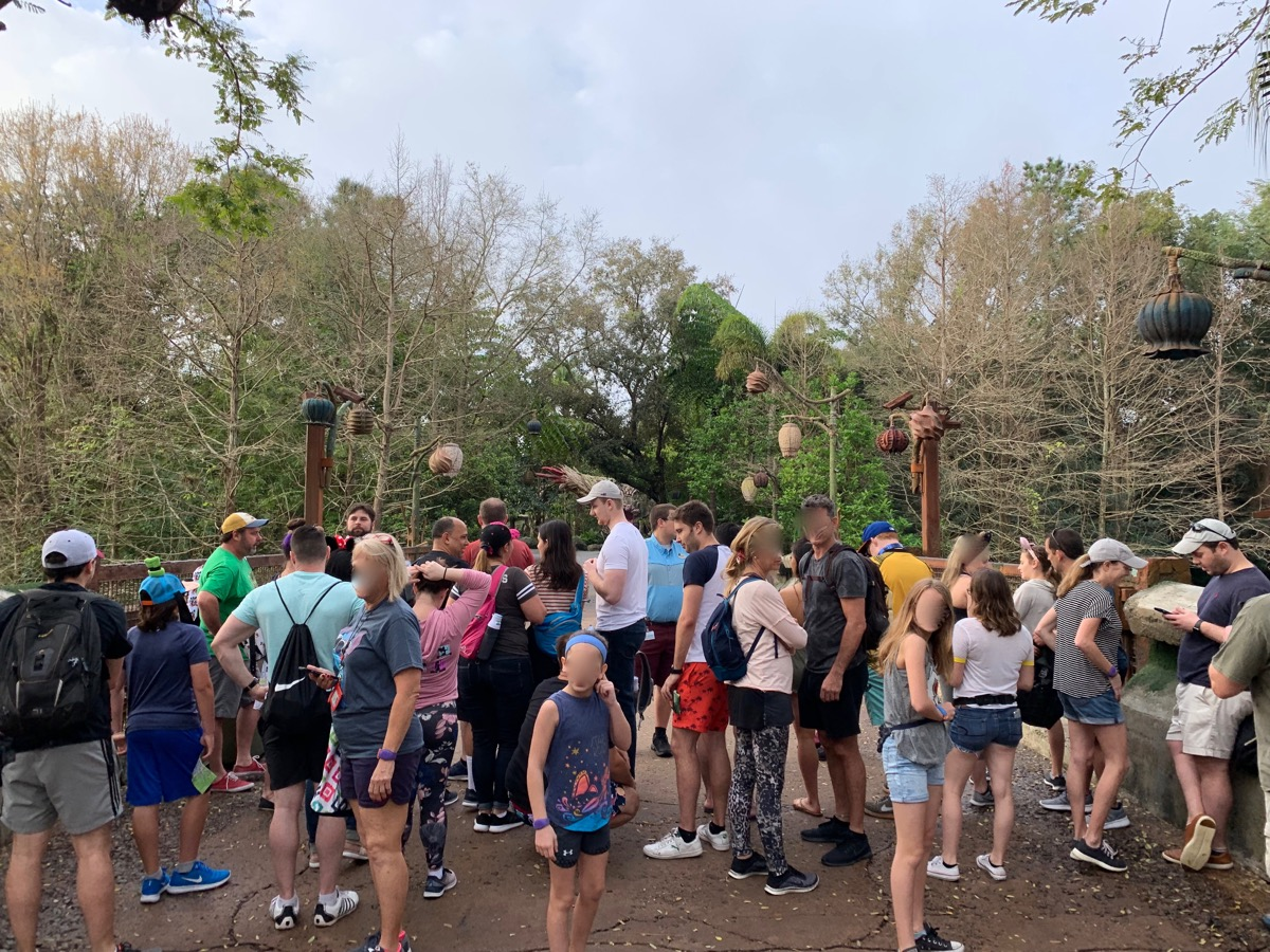 disney animal kingdom rope drop corralling 1.jpeg