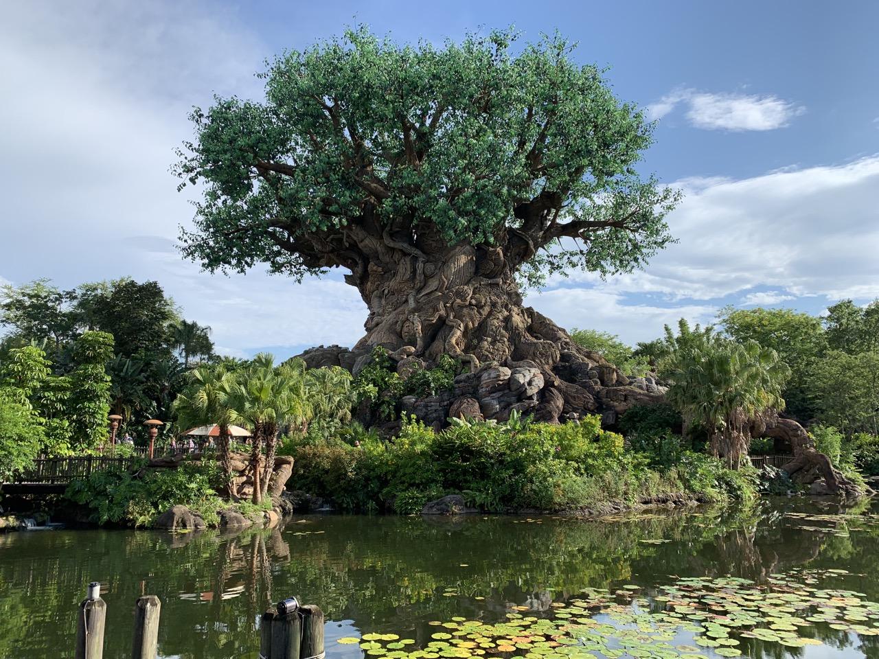 disney world trip report early summer 2019 day 1 11 tree.jpeg