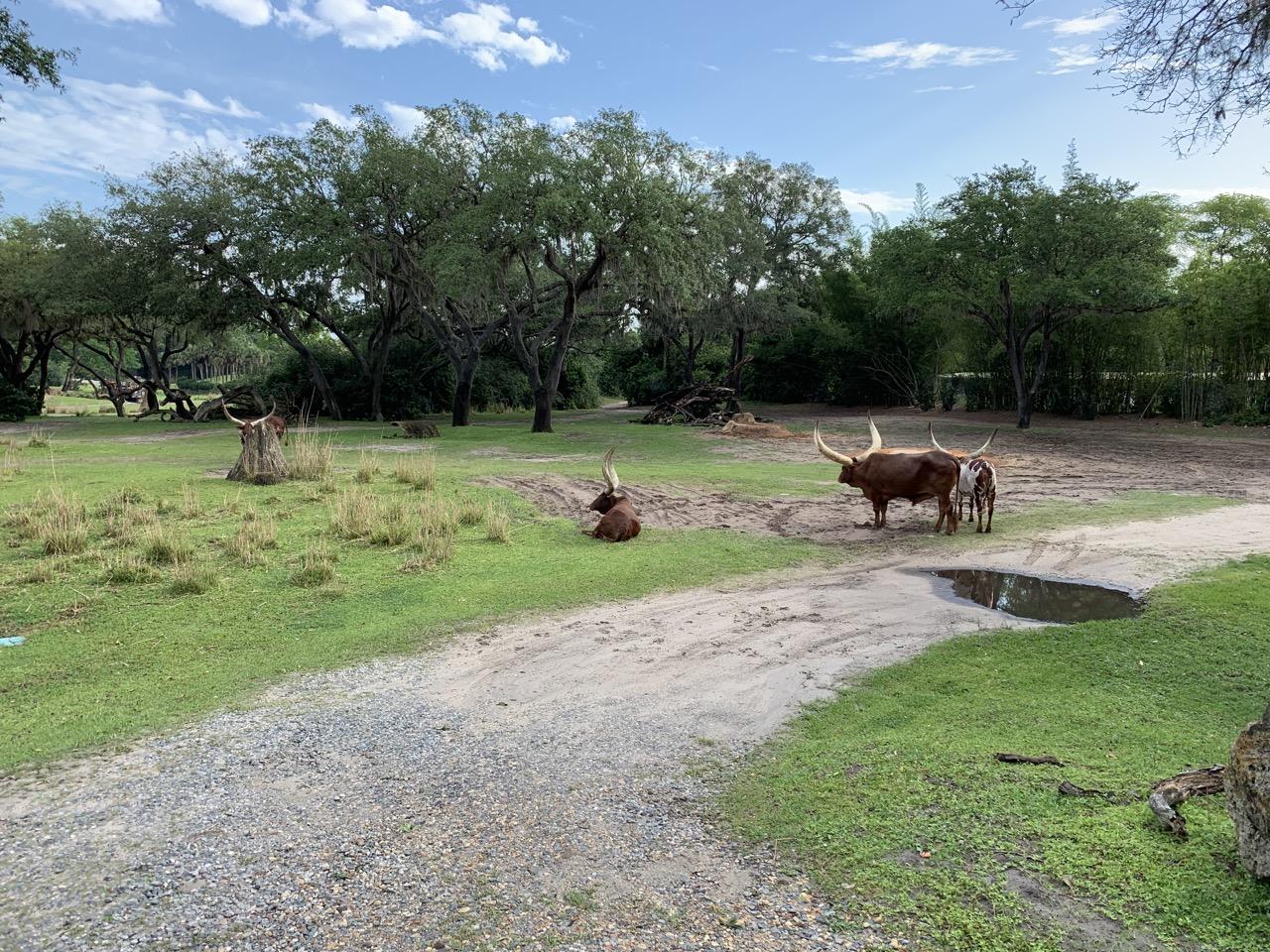disney world trip report early summer 2019 day three 34 safari.jpeg