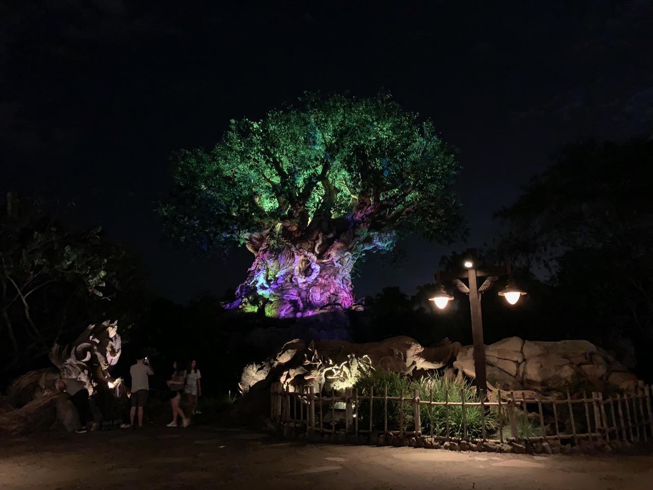 disney world animal kingdom after hours 38 tree of life.jpeg