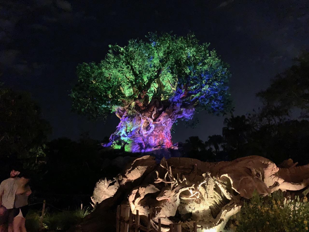 disney world animal kingdom after hours 40 tree of life.jpeg