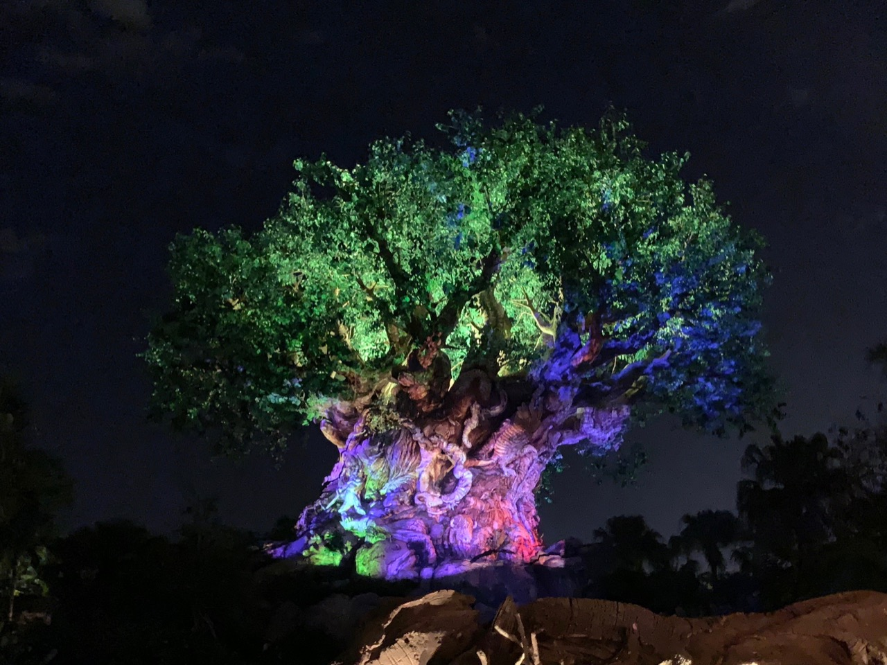 disney animal kingdom hours 03 night tree.jpeg