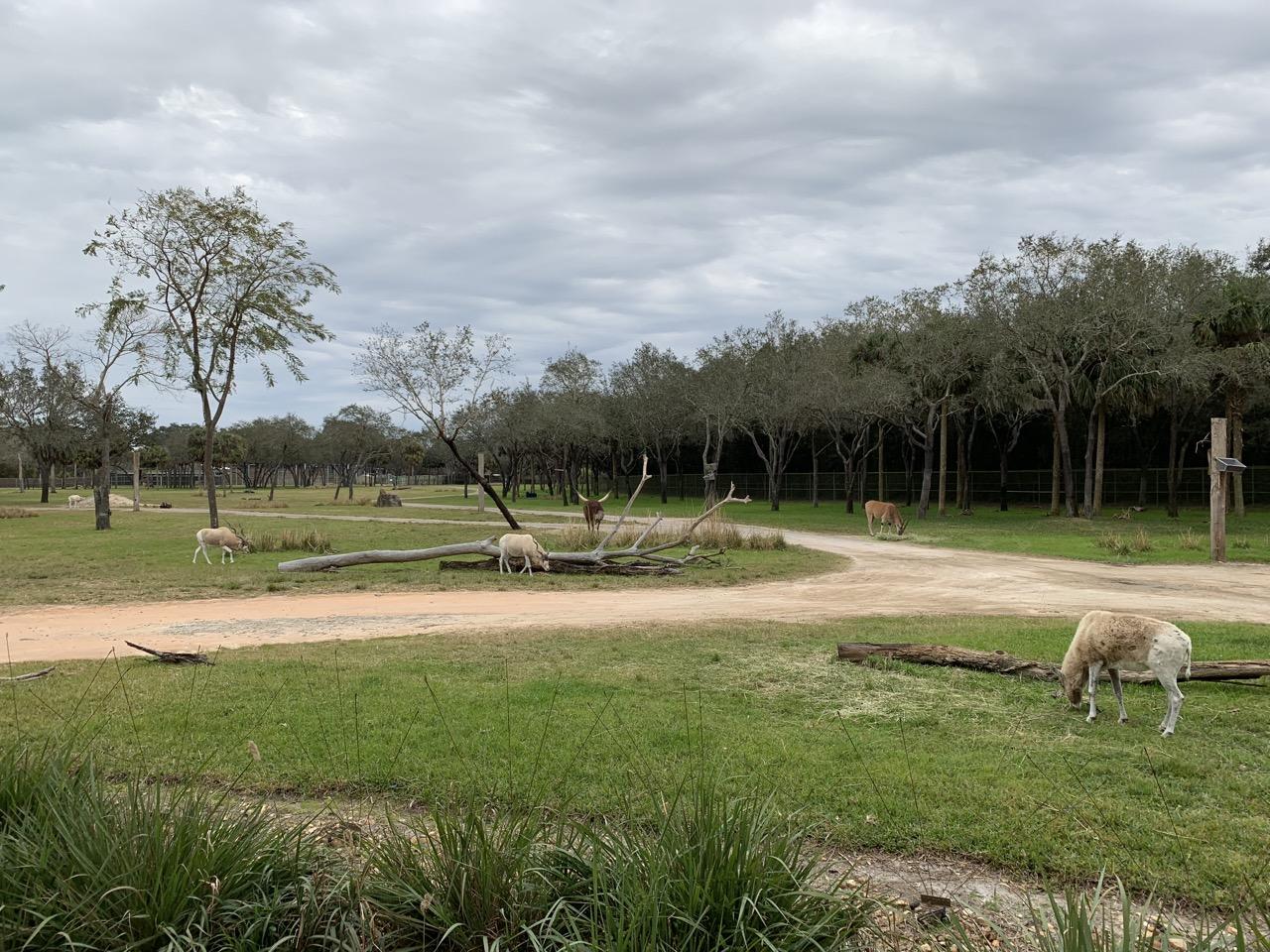disney world best deluxe resort hotel ranking 04 animal kingdom lodge savanna.jpeg
