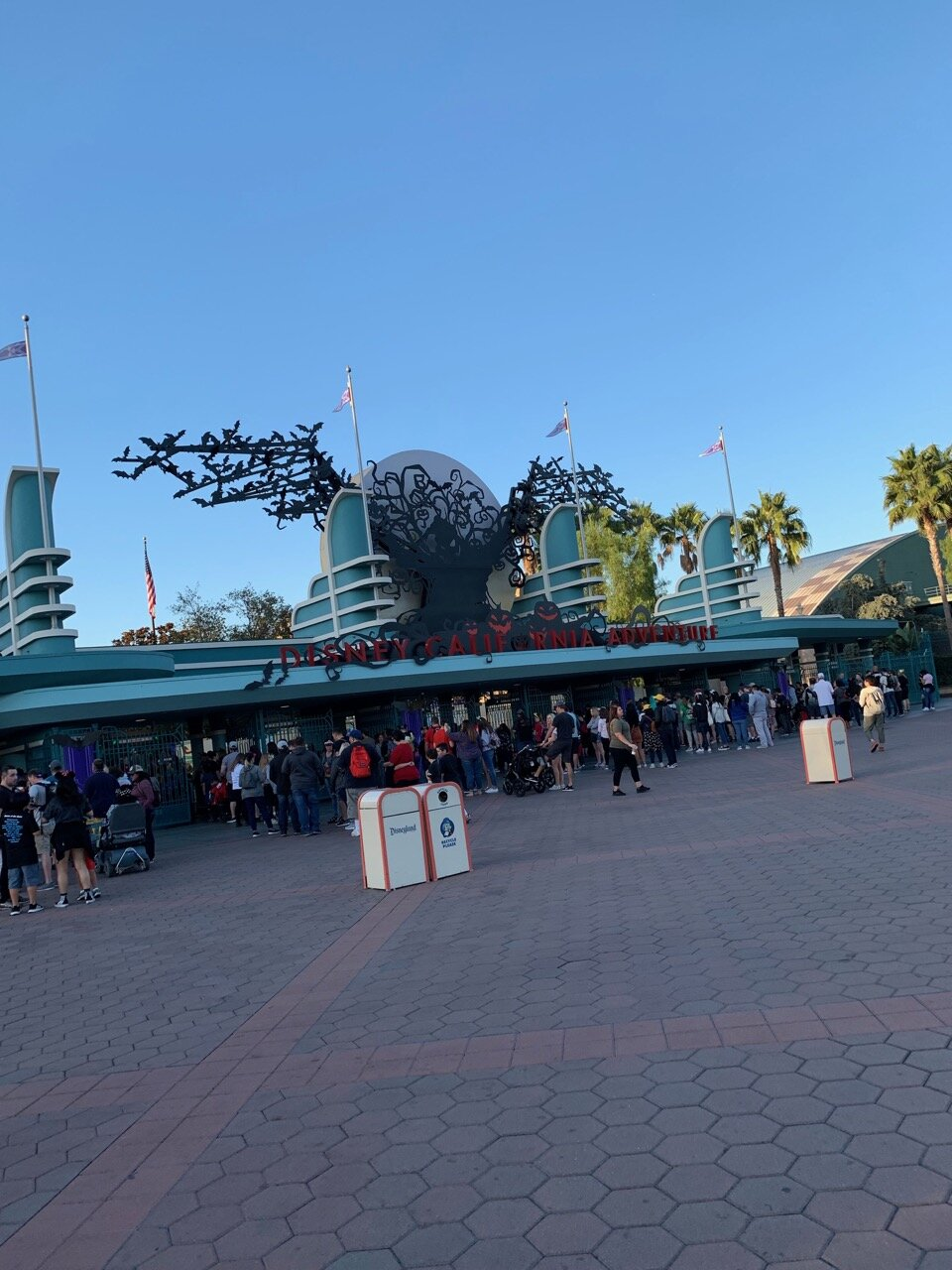 dca rope drop 1.jpeg