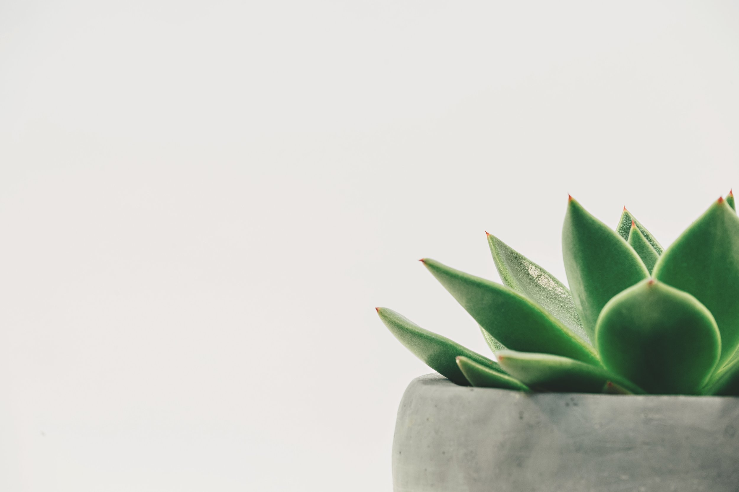 Succulent Large.jpg