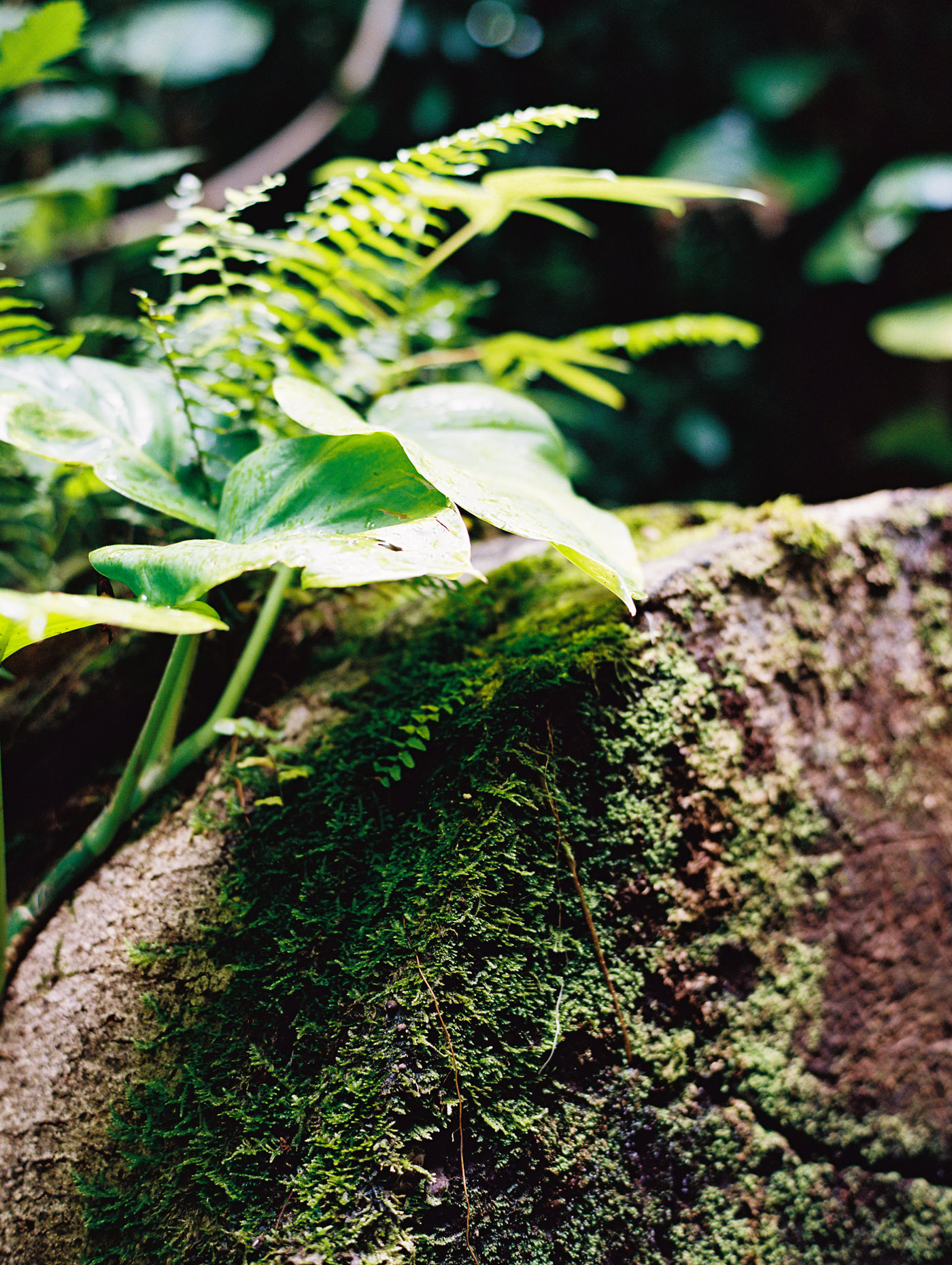 I'm a sucker for moss on trees. Not sure why, but it's real. Shot on my Contax 645, Portra 400+1 with a Hoya macro filter.