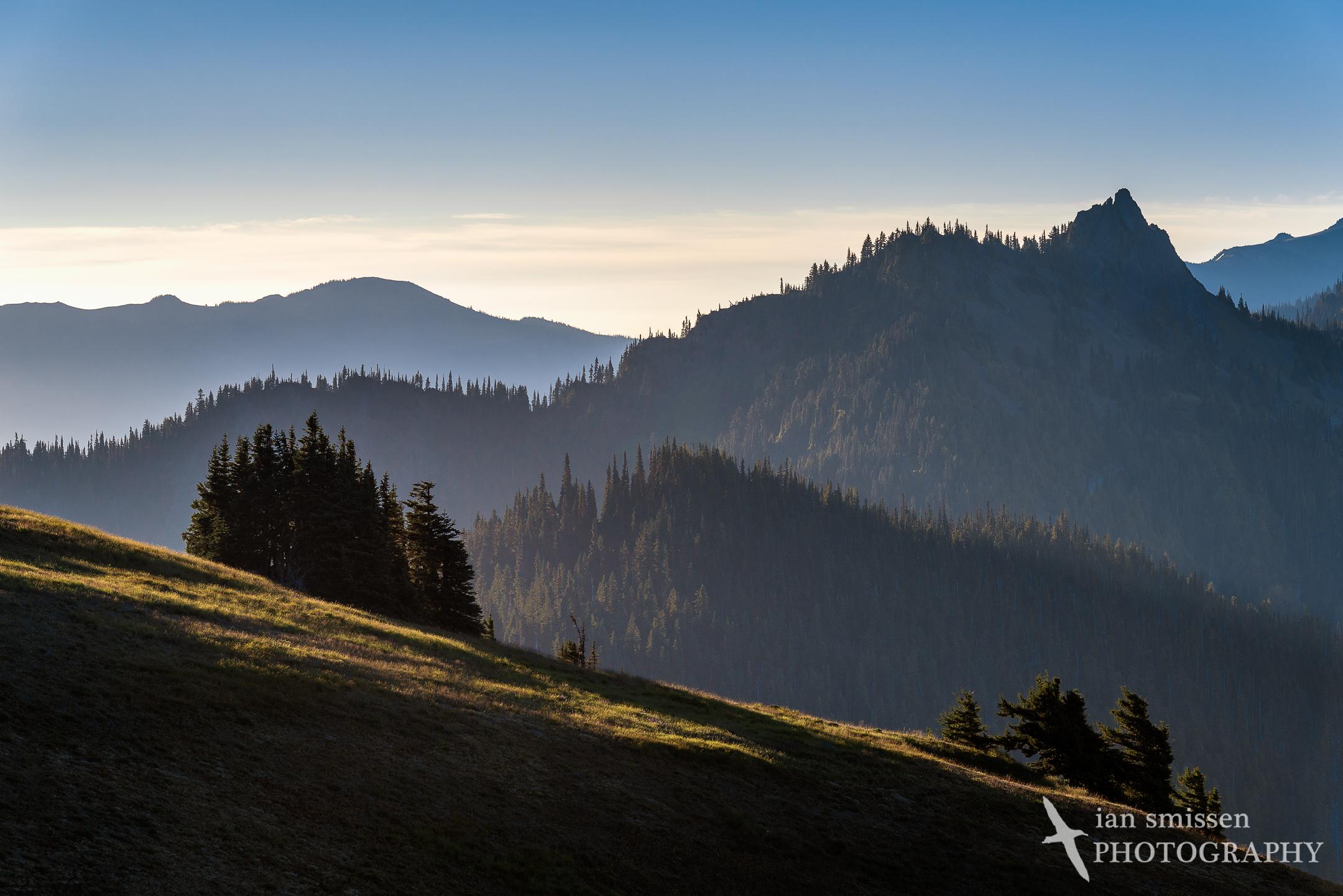 Morning mist, Hurricane Ridge
