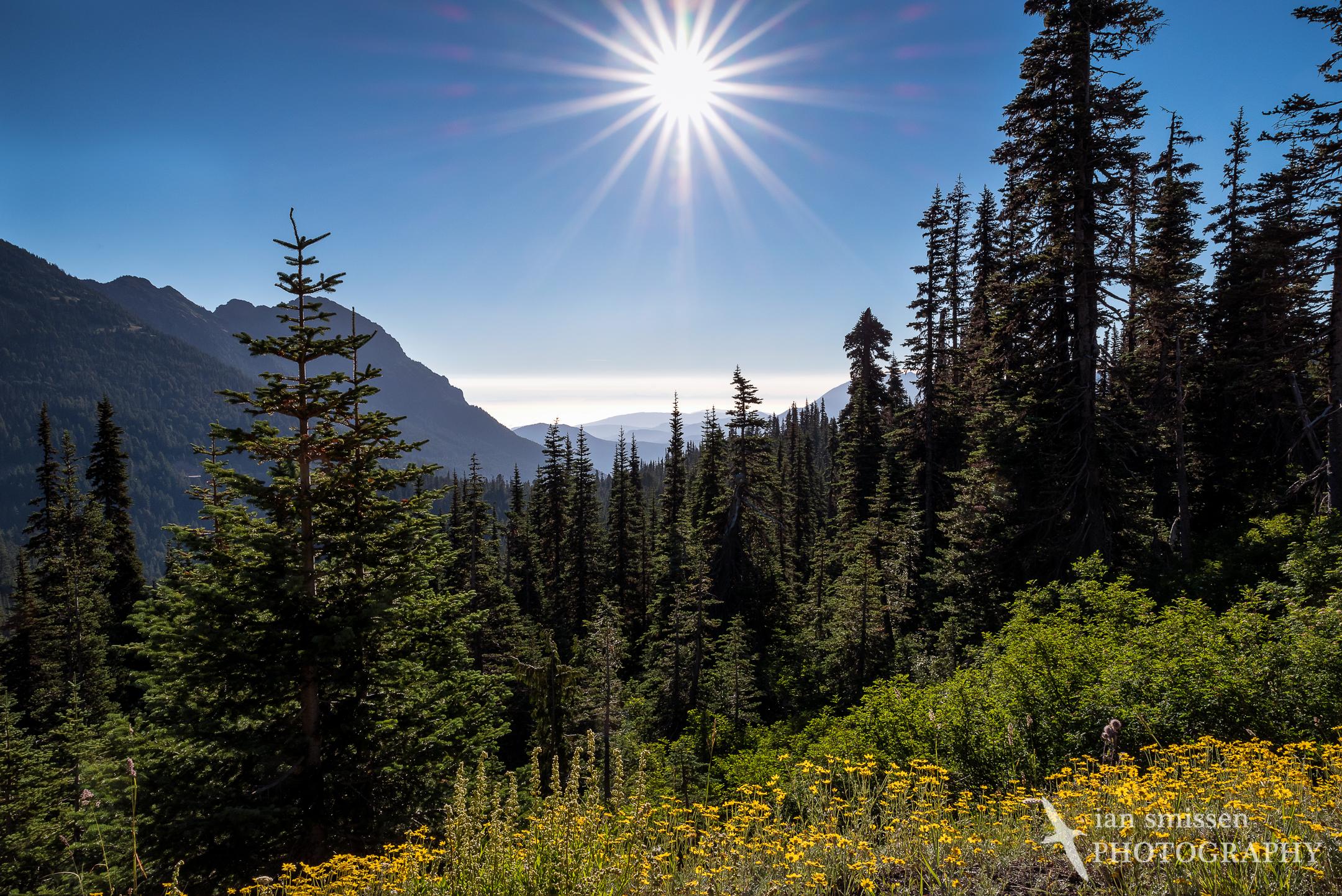 Into the sun, Hurricane Ridge