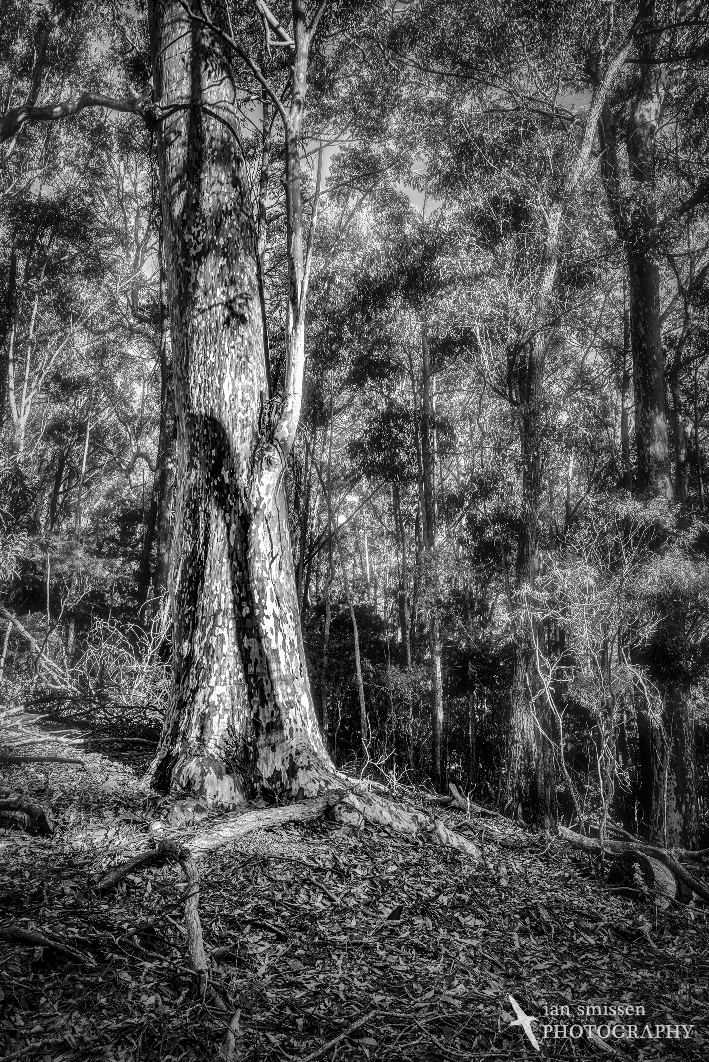 Spotted Gum 29mm, ISO 100, 1/25-0.6 seconds @ f/11, 5-shot merged HDR