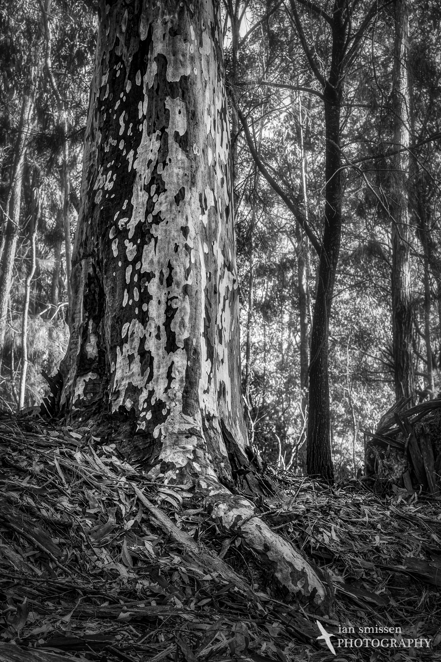 Spotted Gum 70mm, ISO 1600, 1/400 second @ f/11