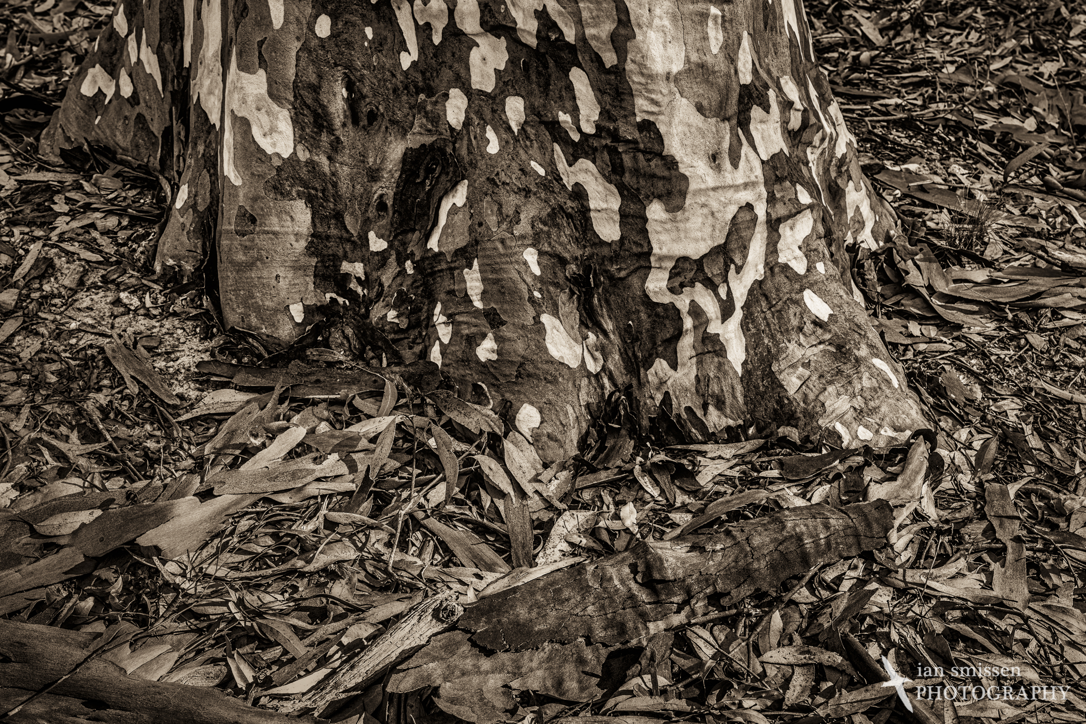 Spotted Gum and leaf litter 60mm, ISO 100, 1/40 second @ f/11