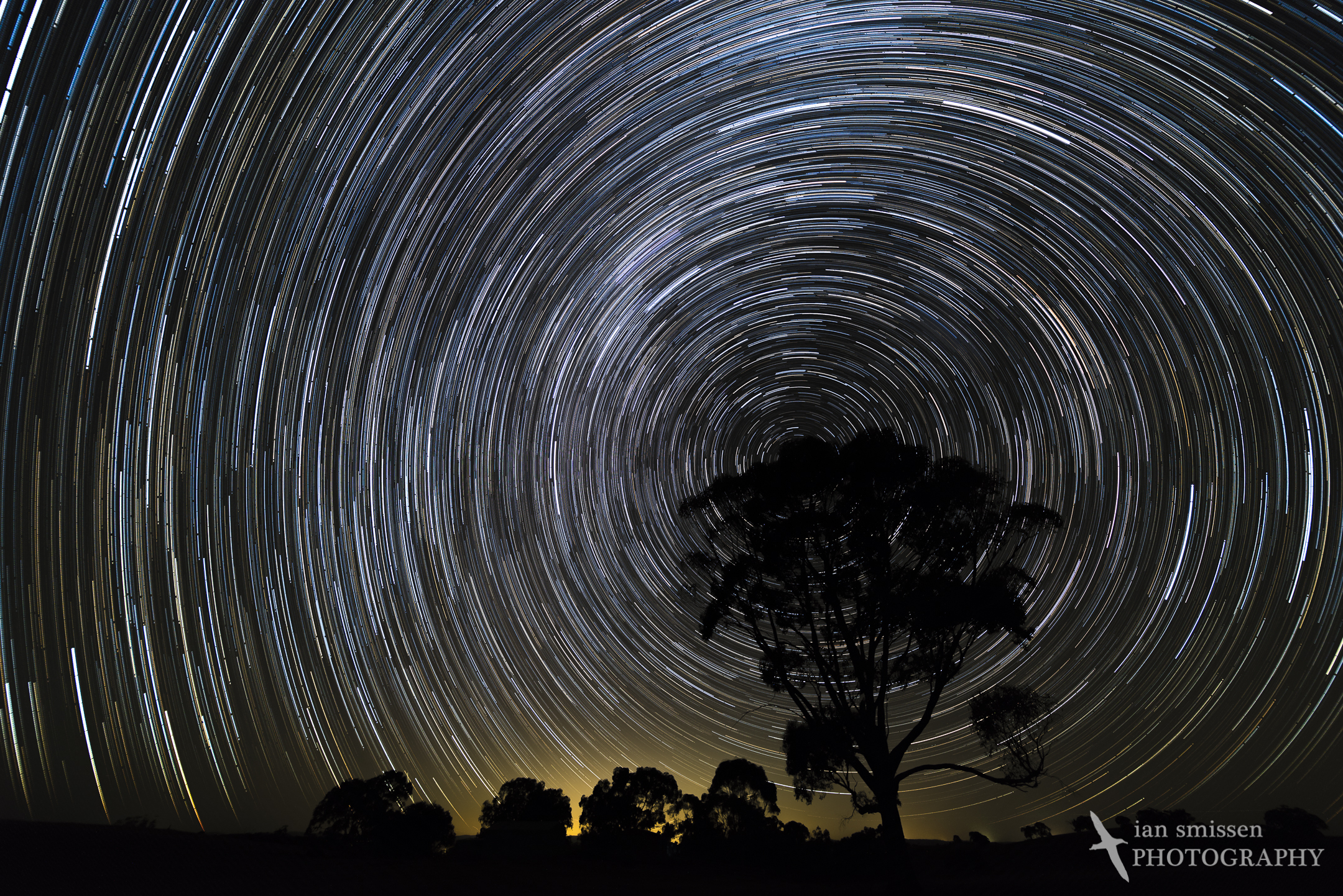 Star trail over gum tree