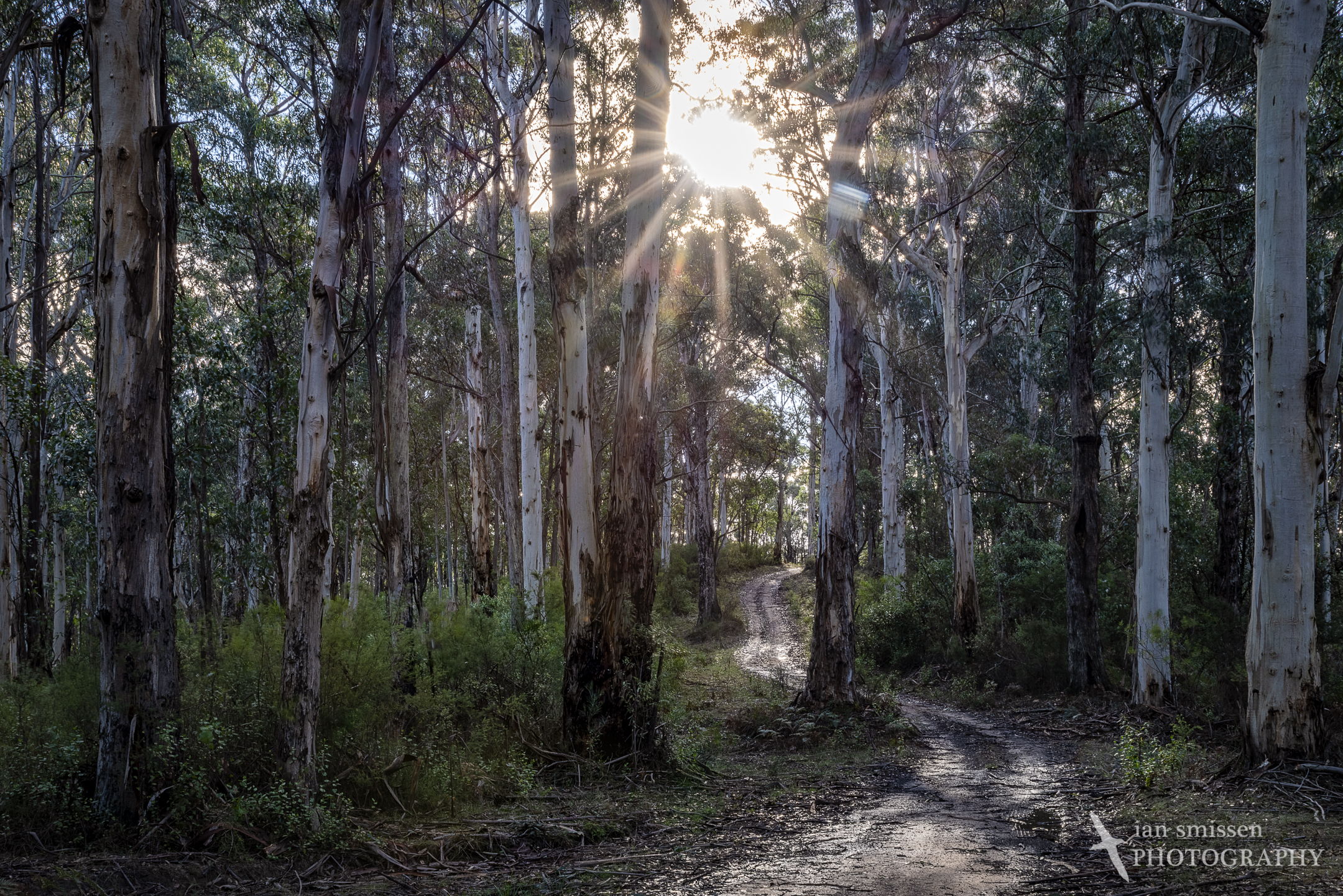 Big Hill Track, Great Otway National Park, Victoria, Australia 35mm, ISO 100, 5-shot HDR: 1/8 to 2 seconds @ f/22 (two shots blended to remove sun flare)