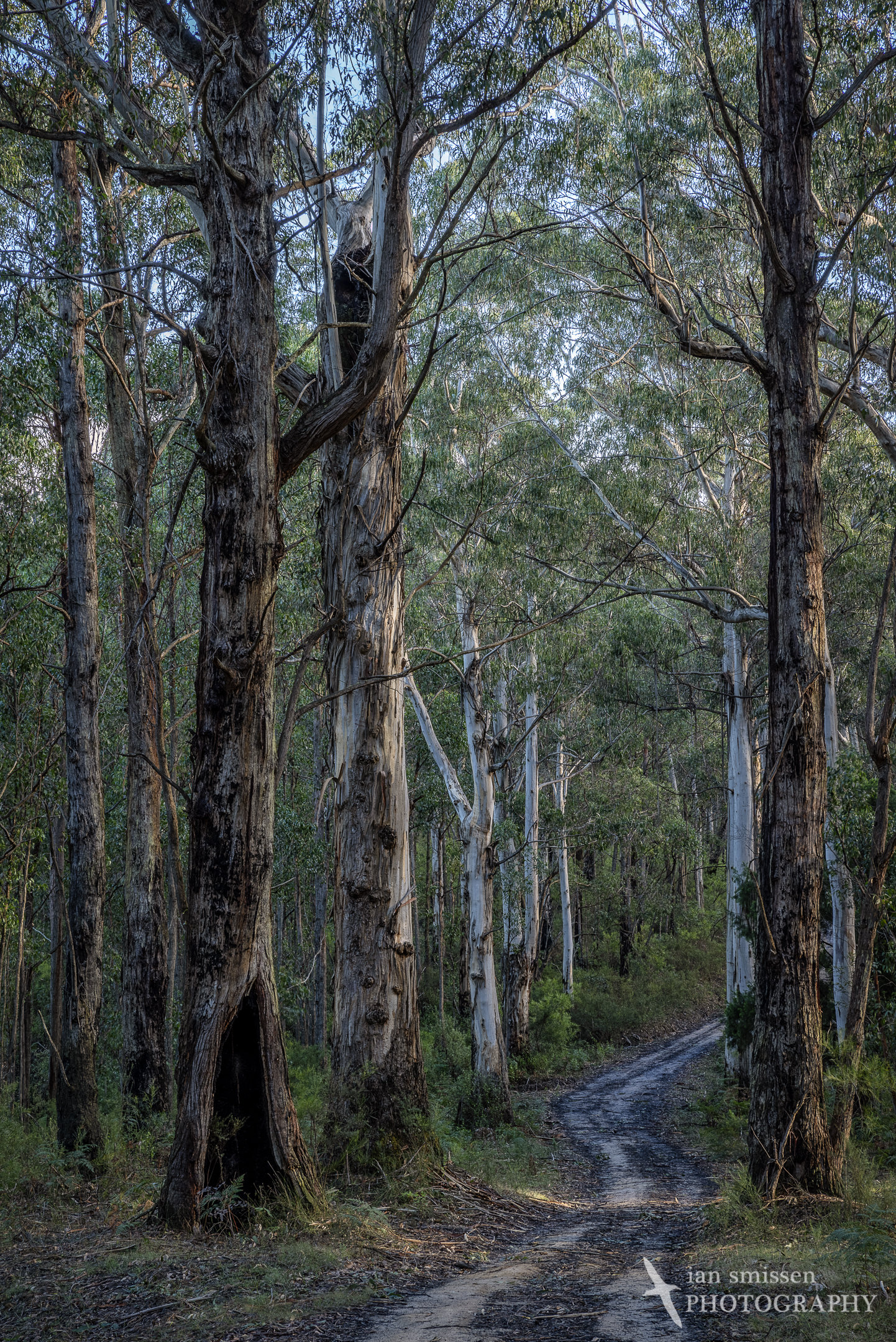 Big Hill Track, Great Otway National Park, Victoria, Australia 60mm, ISO 100, 5-shot HDR: 1/5 to 3 seconds @ f/16