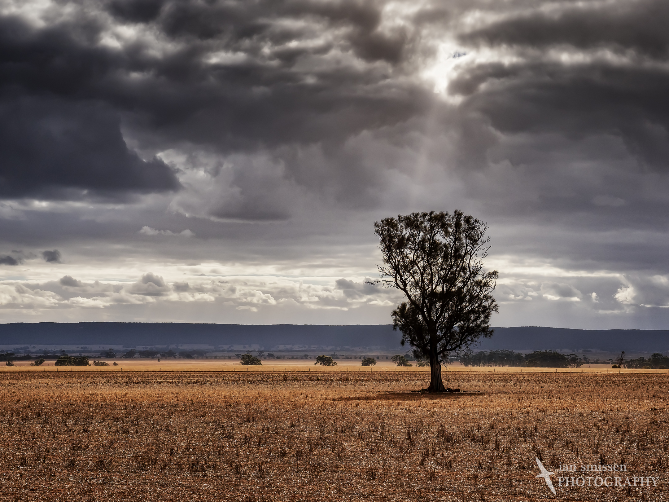 Clearing storm and lone tree