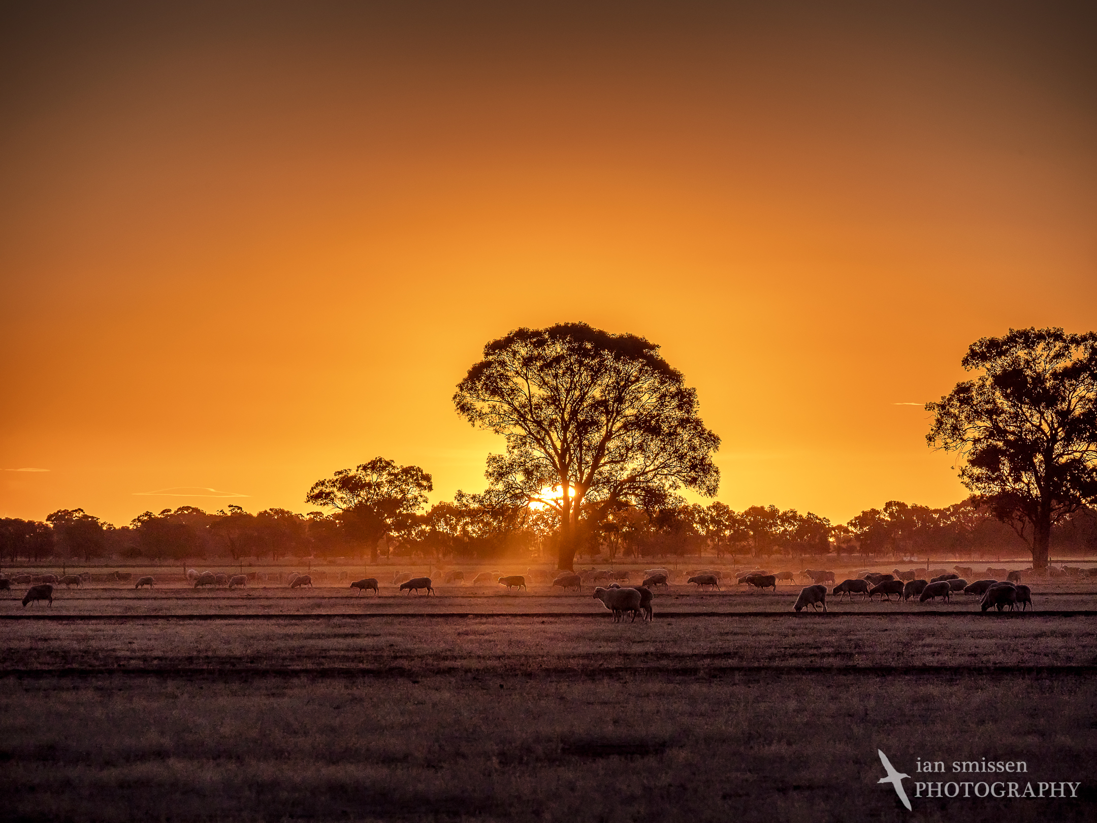 Sunset in the Murray Valley